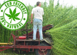 The Hemp Conspiracy: Facts vs. Myth